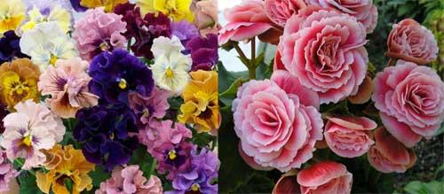 Flores ideais para decorar no outono