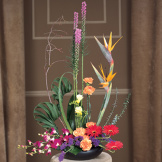 Exotic Sympathy Arrangement