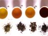 Dato Cookcina: tipos de té y sus diferencias