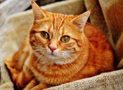 La llegada de un gato a tu vida no es casual