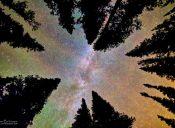 Pequeñas cosas increíbles: mirar las estrellas tendida en el césped