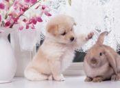 Mascotas ¿Cuál es tu favorita?