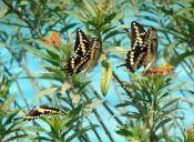 Sentir mariposas en el estómago aún siendo grandes
