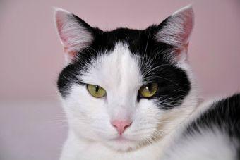 ¿Es verdad que los gatos absorben la energía negativa?
