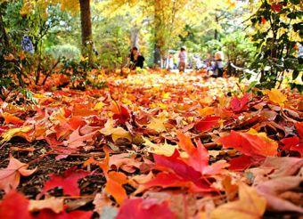 Sale el verano y entra el otoño