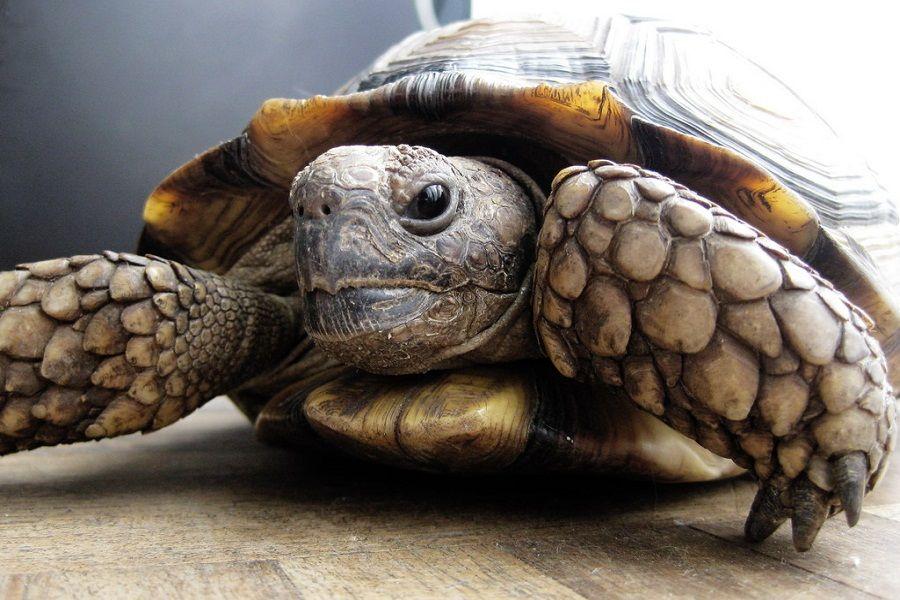 C mo hacer un terrario para una tortuga de tierra - Como construir un terrario ...