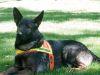 Haz tu donación para los perritos rescatistas del terremoto de Ecuador