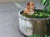 Perros que hacen lo que se les da la gana