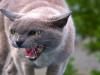 Cómo manejar un ataque de ira de tu gato