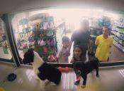 Perros de tienda de mascota, son cambiados por otros para su adopción