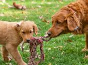 Video: Perrita llora de emoción al recibir ayuda para sus cachorros