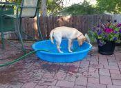 [Video] Maddie, la perrita que se baña sola