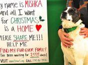 Mishka, la perrita que lleva años en un refugio esperando un hogar
