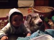 [Video] Una perro dice mamá para que le den comida