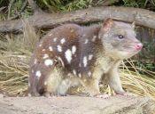 Conoce al marsupial australiano que gusta de los baños comunitarios