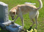 Ahora los perros podrán descansar con sus dueños