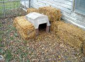 Los perros callejeros pueden optar a un Subsidio habitacional