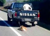 Un perro fue arrastrado por una camioneta en el sur de Chile