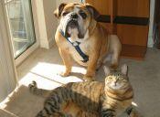 [Video] Perros y gatos rompen el mito de su rivalidad