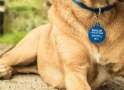 Aplicaciones de mascotas: Conoce uPet