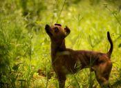 Las mascotas también pueden sanarse gracias a los remedios naturales