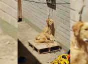 Familia de mascota ahorcada en Copiapó entrega explicación
