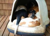 Estos perritos se acomodan como pueden (video)