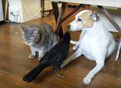 Pajarito alimenta a gato y a perro (video)