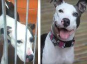 Animalitos antes y después de ser adoptados ¡Observa sus caritas! (video)