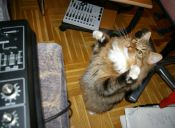 [Video] Miras las espectaculares acrobacias de los gatos