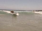 [Video] Conoce al campeón de un torneo de surf para perros