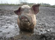 [Video] Animales de la granja celebran la libertad