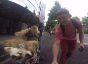 [Video] Japonés pasea a sus gatos en coche de niños