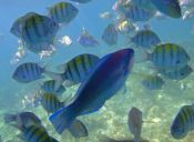 Las poblaciones de animales marinos han disminuido en los últimos años