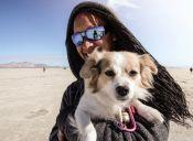 Veterinarios recomiendan no tomar en brazos a los perros
