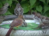 Cómo tener pájaros libres en tu casa
