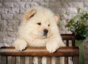 Autoridades ponen atención al Festival de Carne de Perro en China