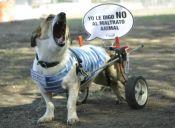 El Campito Refugio, organización dedicada a los perritos discapacitados