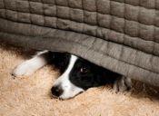 Crean el primer ansiolítico para perros