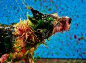 [Fotos] Los perros pueden crear únicas piezas de arte