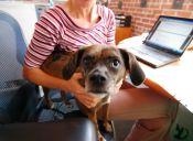 Las mascotas en las oficinas pueden ser muy beneficiosas
