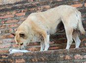 Comedog, la iniciativa que alimenta a los perros callejeros de España