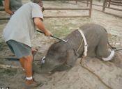 Diputados planean terminar con actuación de animales en circos en Chile