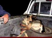 Hombre que arrastra perro 10 kms se defiende: