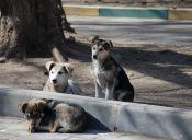 Funcionarios municipales de Lota causaron graves heridas a perros callejeros