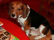 En México los amantes de los perros podrán comer junto a sus mascotas