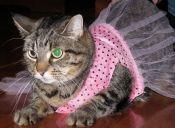 10 disfraces de gato para un Halloween perfecto