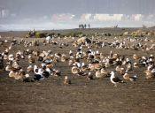 Humedal del Río Maipo fue nombrado sitio de importancia global para las aves playeras