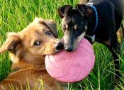 ¿Qué debemos considerar cuando escogemos un juguete  para nuestro perro?