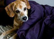 Científicos ahora pueden detener la ramificación de un cáncer en las mascotas